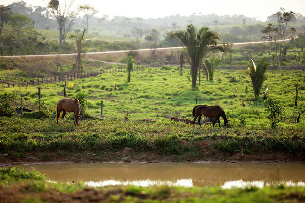 Lakes Region Photograph - Two Horses Graze On The River Bank At by Simon Rawles