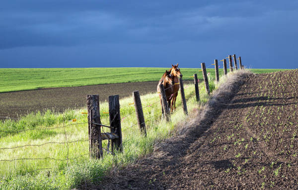 Photograph - Two Horses In The Palouse by Cheryl Strahl