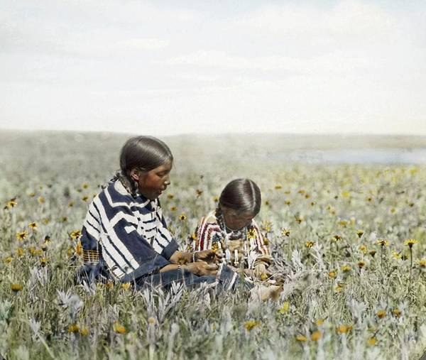 Painting - Two Indian Girls Seated In Field Of Flowers By Walter Mcclintock by Walter McClintock