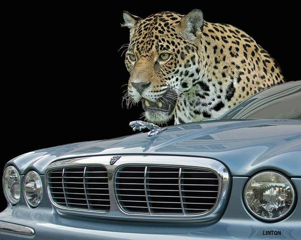 Photograph - Two Jaguars 2 by Larry Linton