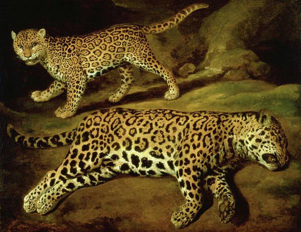 Wall Art - Painting - Two Jaguars by Jacob Gerritsz Cuyp