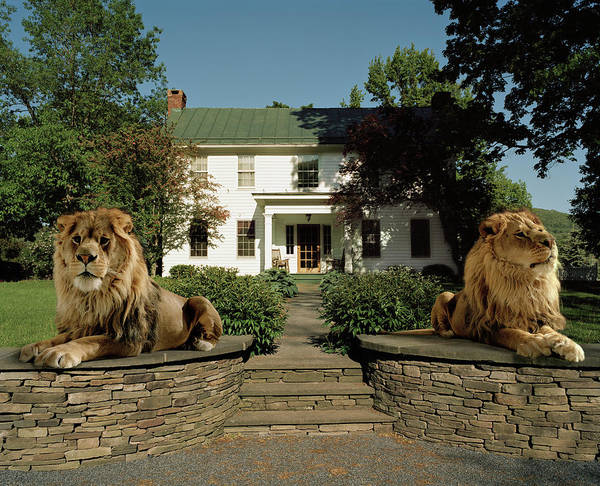 Out Of Context Photograph - Two Lions Guarding A House Entrance by Matthias Clamer