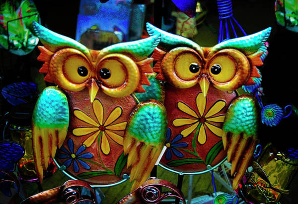 Photograph - Two Owls Series 0420 by Carlos Diaz