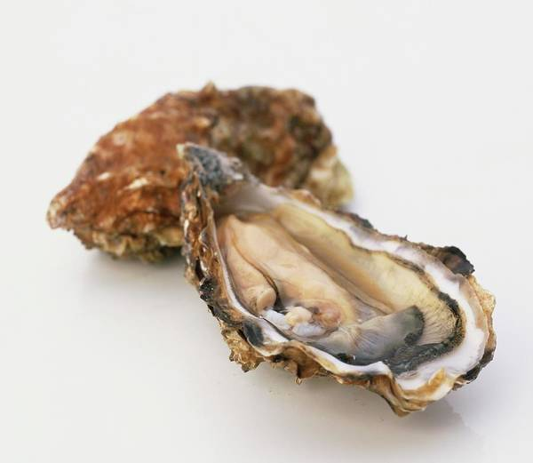 Wall Art - Photograph - Two Oysters, One Of Them Open, Close Up by Ian O'leary