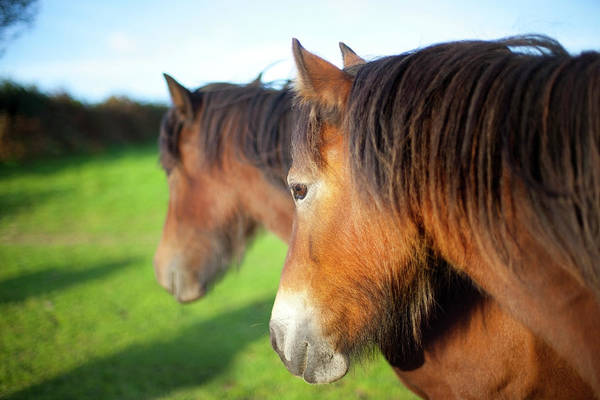 Painted Horses Photograph - Two Ponies by Sashafoxwalters