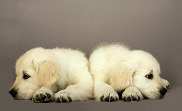Canine Photograph - Two Puppies by Martin Rogers