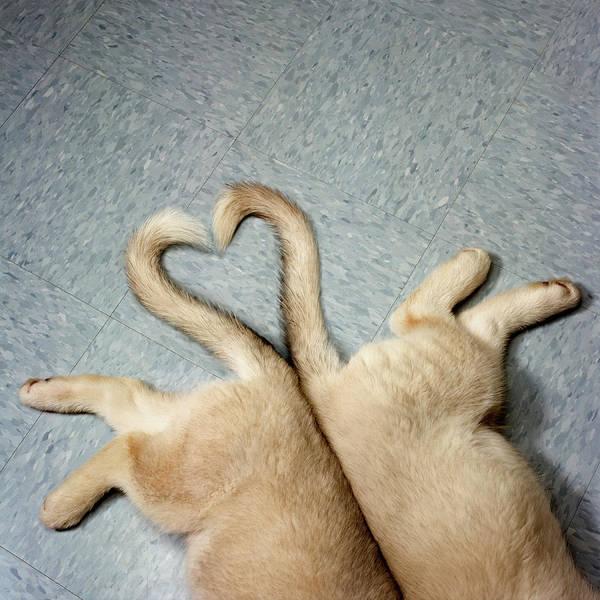 Boyfriend Photograph - Two Puppy Tails In Heart Shape by Gk Hart/vikki Hart