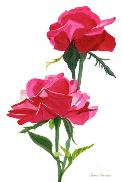 Wall Art - Painting - Two Red Roses On White by Sharon Freeman