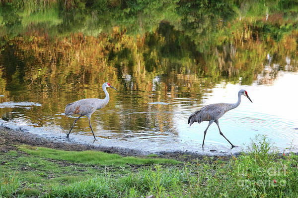 Photograph - Two Sandhills With Pond Reflection by Carol Groenen
