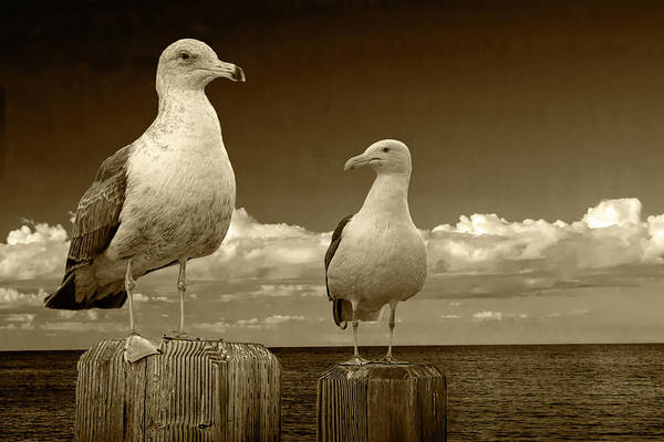 Photograph - Two Sea Gulls On Pier Pilings In Sepia Tone by Randall Nyhof