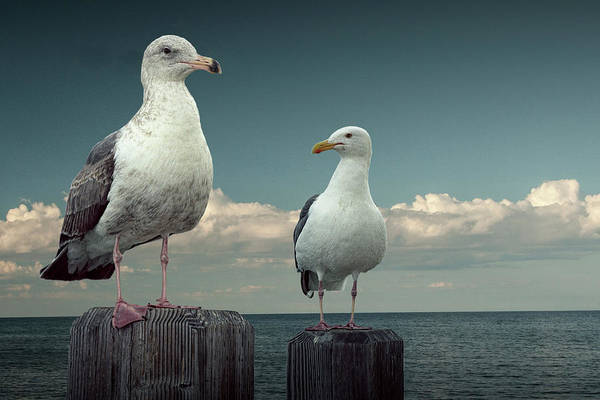 Photograph - Two Sea Gulls On Pier Pilings by Randall Nyhof
