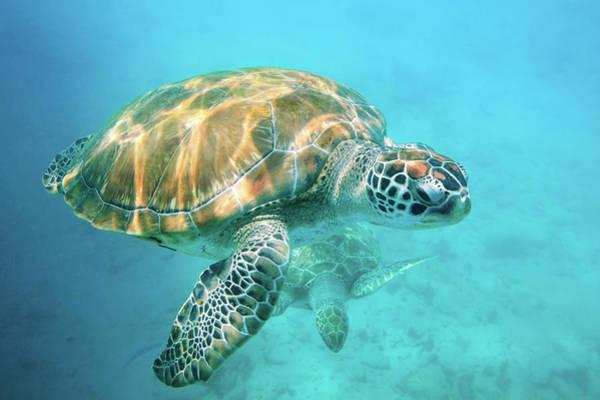 Two Sea Turtles Art Print by Matteo Colombo