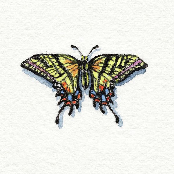 Wall Art - Painting - Two Tailed Swallowtail Papilio Multicaudata Daunus Watercolor Butterfly by Irina Sztukowski