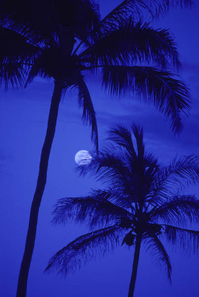 Wall Art - Photograph - Two Tall Palm Trees With Moon by Design Pics/ron Dahlquist