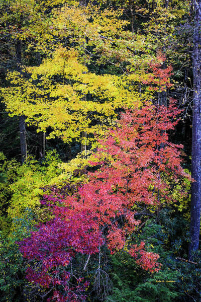Photograph - Two Toned Fall by Dale R Carlson