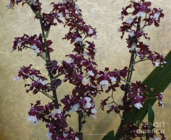 Digital Art - Two Toned Orchids by Kathie Chicoine
