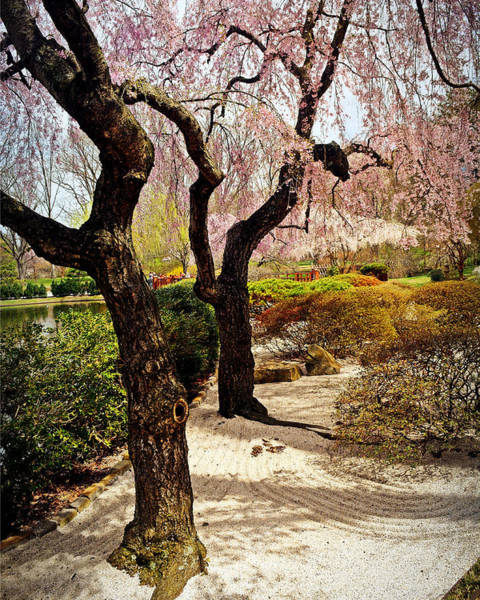 Photograph - Two Trees At The Garden by Marty Koch