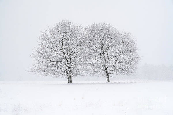Wall Art - Photograph - Two Trees by Benjamin Williamson
