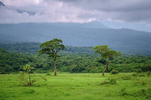 Photograph - Two Trees In Arusha by Mary Lee Dereske