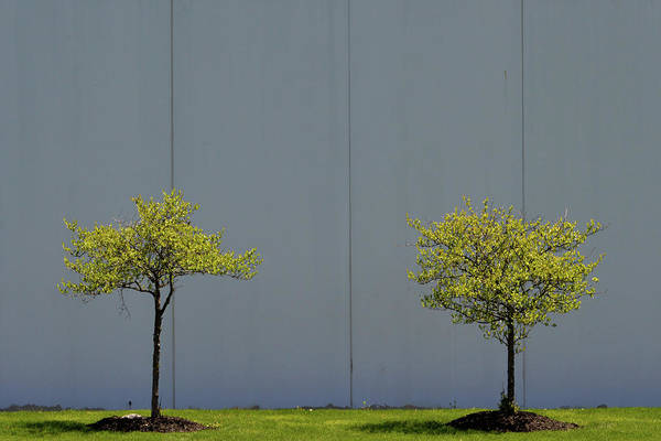 Photograph - Two Trees by Stuart Allen