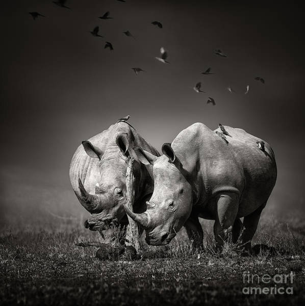 Digital Photograph - Two White Rhinoceros In The Field With by Johan Swanepoel