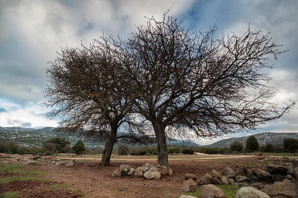 Photograph - Two Winter Trees  by Daniele Fanni