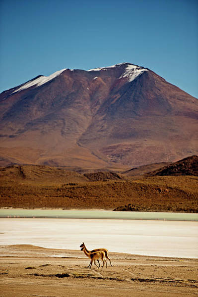 Bolivia Photograph - Two With Snowcapped Mountain by James Morgan