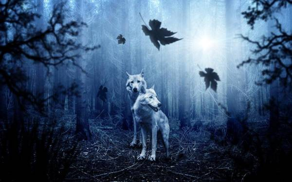 Photograph - Two Wolves by Top Wallpapers