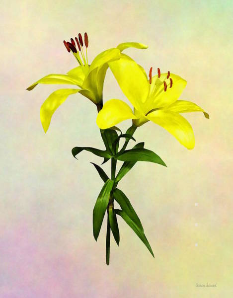 Photograph - Two Yellow Lilies Opened by Susan Savad