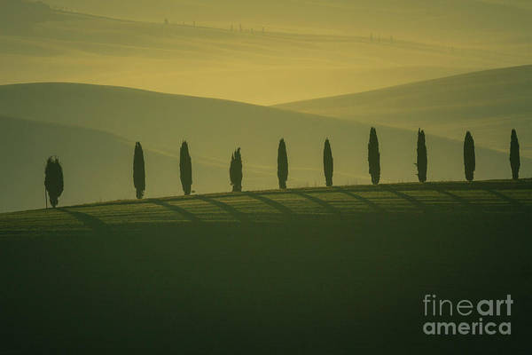 Wall Art - Photograph - Tuscan Cypress Trees In Hilly Landscape by Heiko Koehrer-Wagner