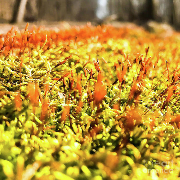 Photograph - Orange Moss 2 by Atousa Raissyan