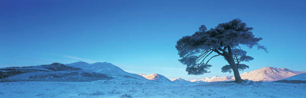 Moor Photograph - Uk, Scotland, Rannoch Moor, Tree And by Peter Adams