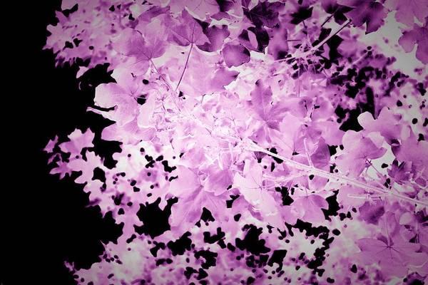 Photograph - Ultraviolet Leaves Landscape Photograph by Itsonlythemoon