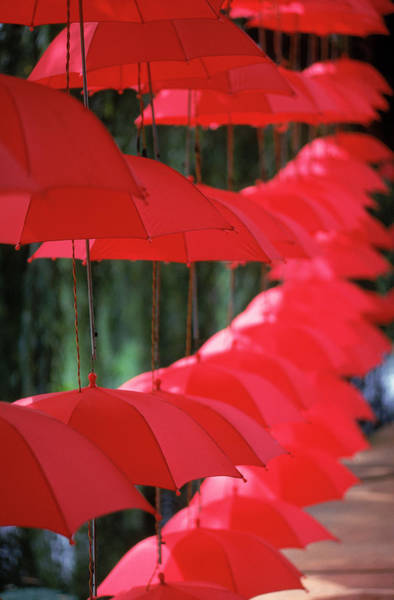 Photograph - Umbrella Lights, Kunming, China by Hal Gage
