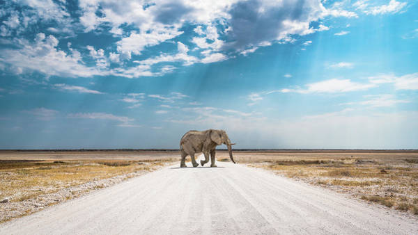 Photograph - Under An African Sky by Hamish Mitchell