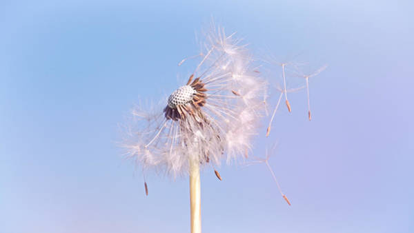 Photograph - Under The Blue Sky by Jaroslav Buna
