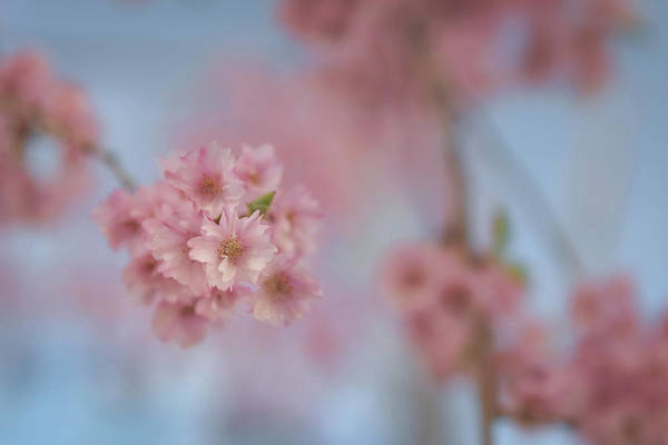 Photograph - Under The Cherry Tree by Kristen Wilkinson