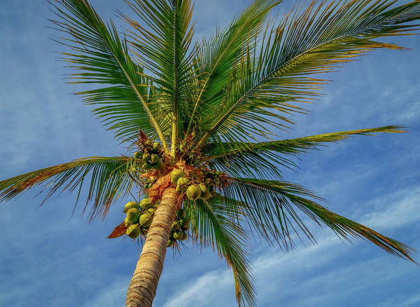 Wall Art - Photograph - Under The Coconut Palm by Jean Noren