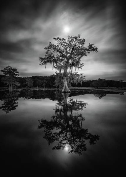 Caddo Lake Wall Art - Photograph - Under The Moonlit Sky Of Caddo Lake by Martin Podt