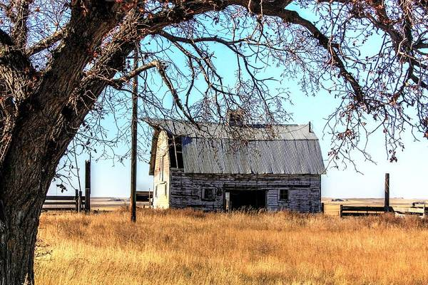 Photograph - Under The Oak  by David Matthews