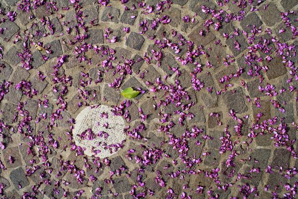 Petal Photograph - Under The Petals by Photo By Federico Patti©