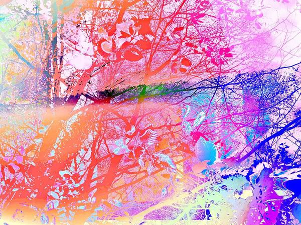 Photograph - Under The Trees Colourful by Itsonlythemoon