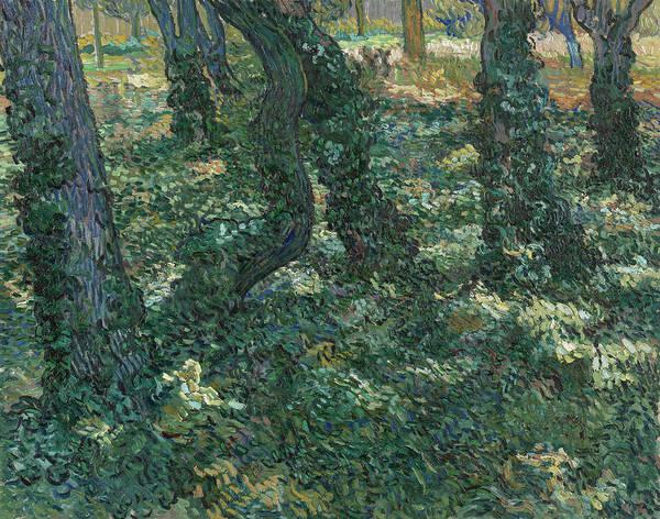 Photograph - Undergrowth, 1889 by Vincent van Gogh