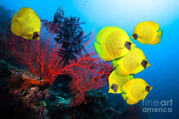 Underwater Image Of Coral Reef And Art Print
