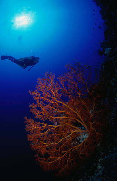 Sport Fish Photograph - Underwater Magic Diver, Fish And Coral by Michael Aw