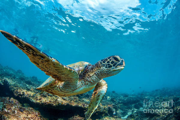 Wall Art - Photograph - Underwater Marine Wildlife Postcard. A by Willyam Bradberry
