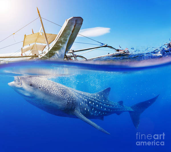 Wall Art - Photograph - Underwater Shoot Of A Whale Shark by Max Topchii
