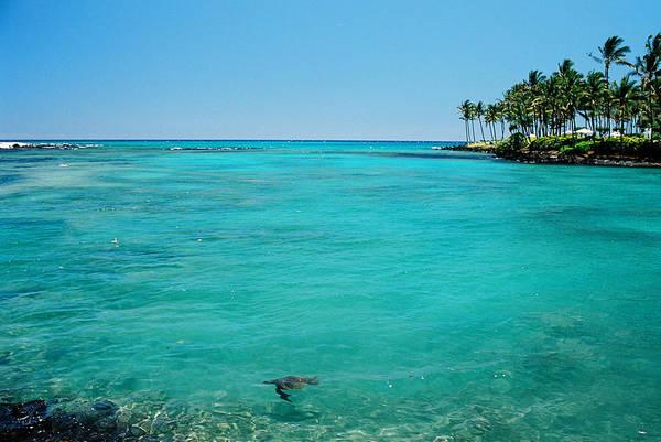Wall Art - Photograph - Underwater Turtle In Maui Hawaii Resort by Ejs9