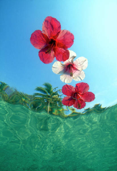 Wall Art - Photograph - Underwater View Looking Up At Floating by Stuart Westmorland
