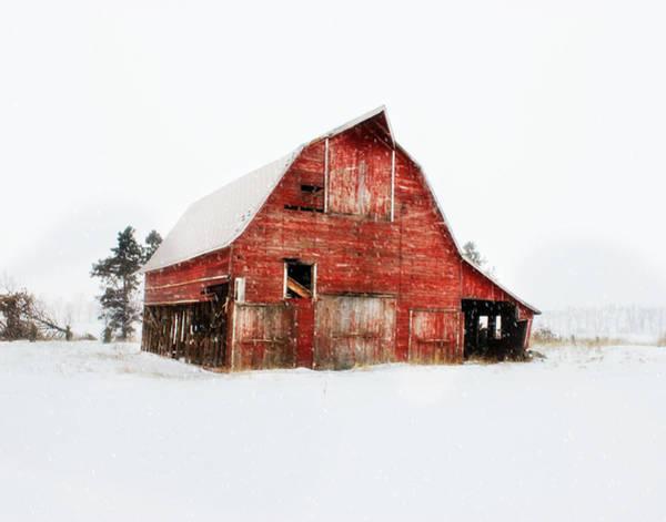 Photograph - Undignified Death by Julie Hamilton